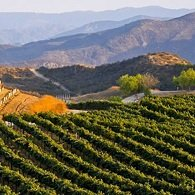 Temecula Vineyards